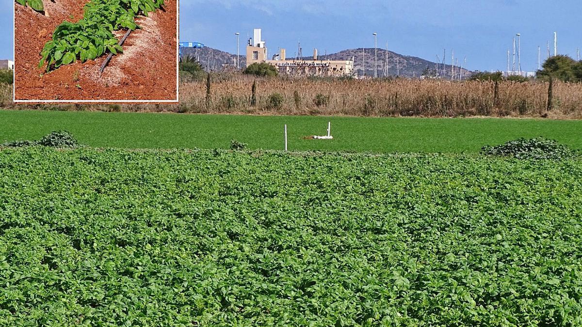 Nueva finca agrícola de regadío intensivo detectada en Los Urrutias