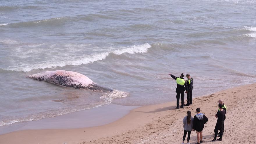 Aparece una ballena muerta en una playa de Guardamar del Segura