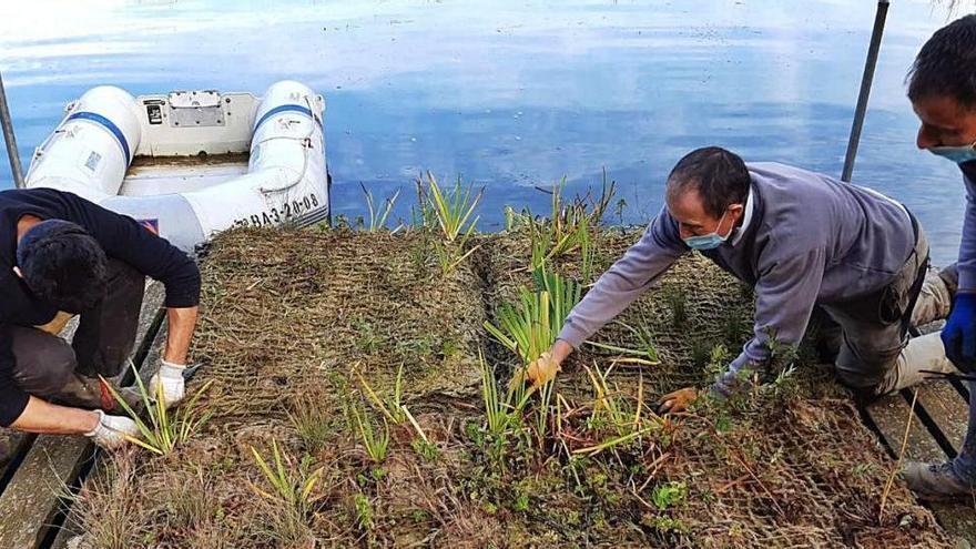 Avià reintrodueix fauna autòctona al llac de Graugés per a la biodiversitat