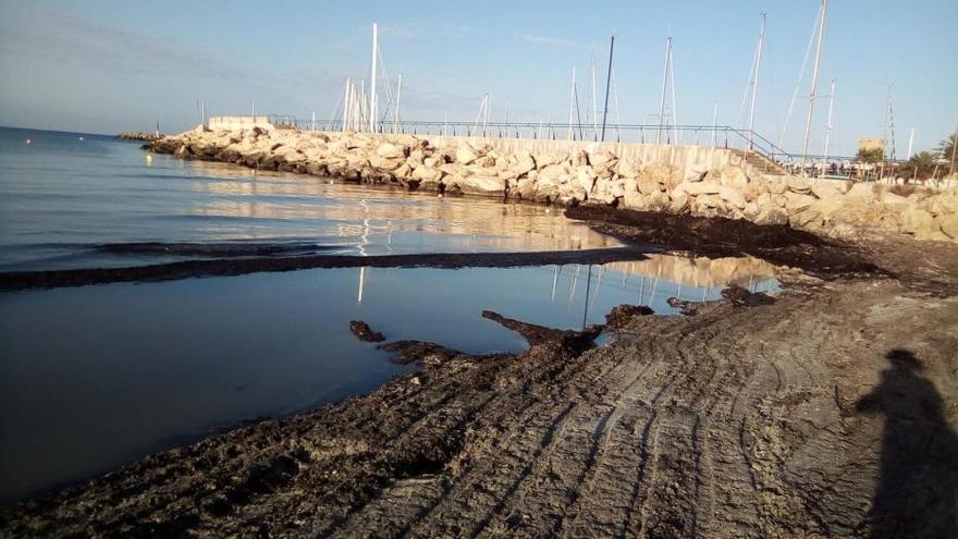 Das Wegbaggern von Seegras geht in Sa Ràpita weiter