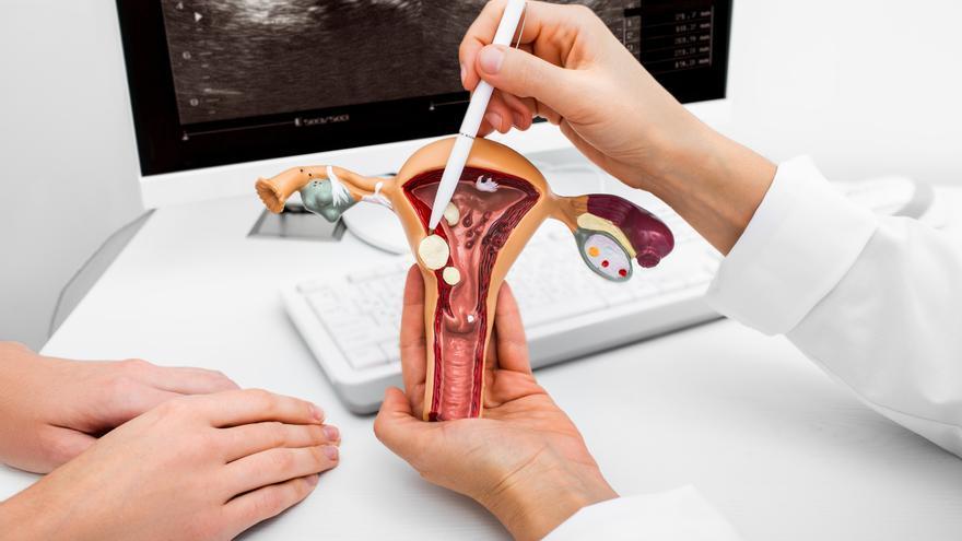 Identifican más de 5.300 microorganismos en el útero de las mujeres sanas