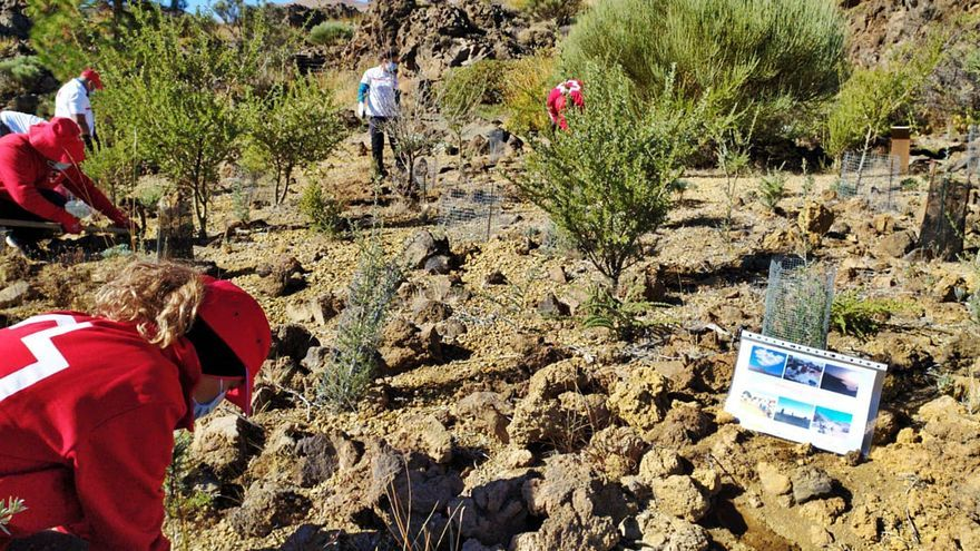 Cruz Roja lidera un proyecto de reforestación