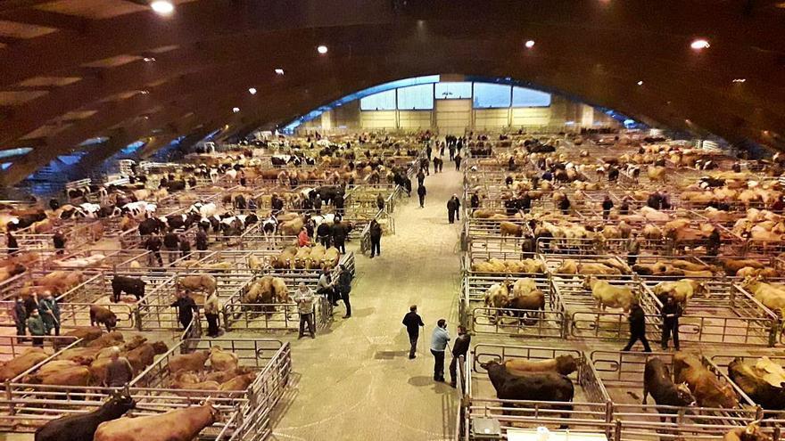 El mercado de ganado bate con 11.788 reses su récord de afluencia mensual