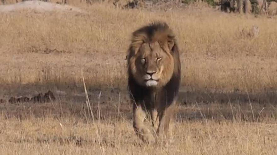 Un león mata a una persona en los alrededores del Parque Nacional de Nairobi