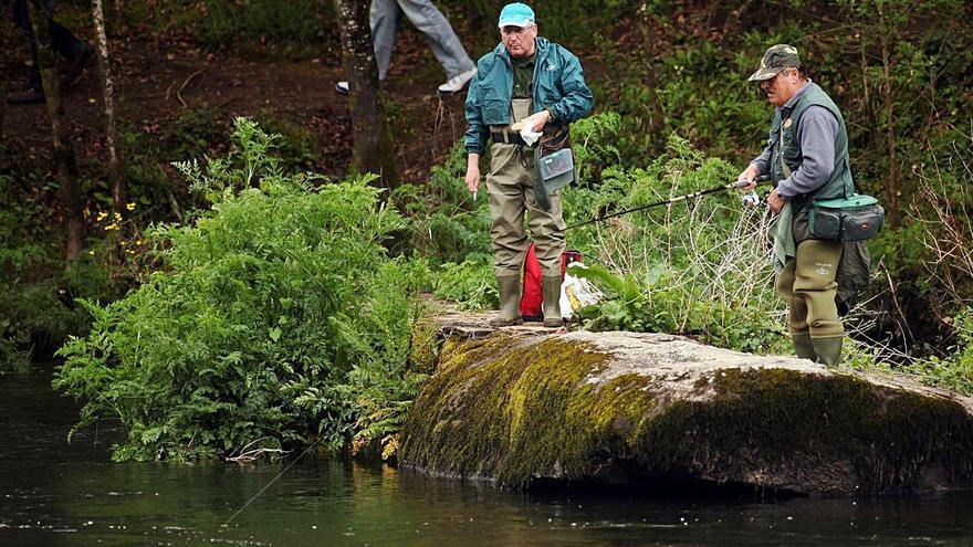 La Xunta anuncia una temporada de dos meses y un cupo de 40 salmones en el Ulla
