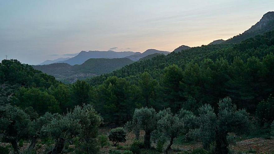Más de 11.300 hectáreas de Baleares se gestionan con acuerdos de conservación