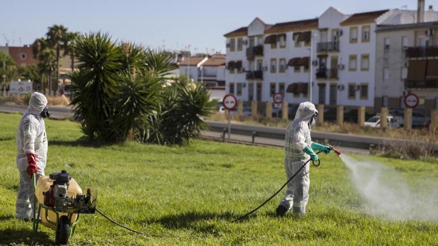 Se mantienen en 49 los afectados por el virus del Nilo