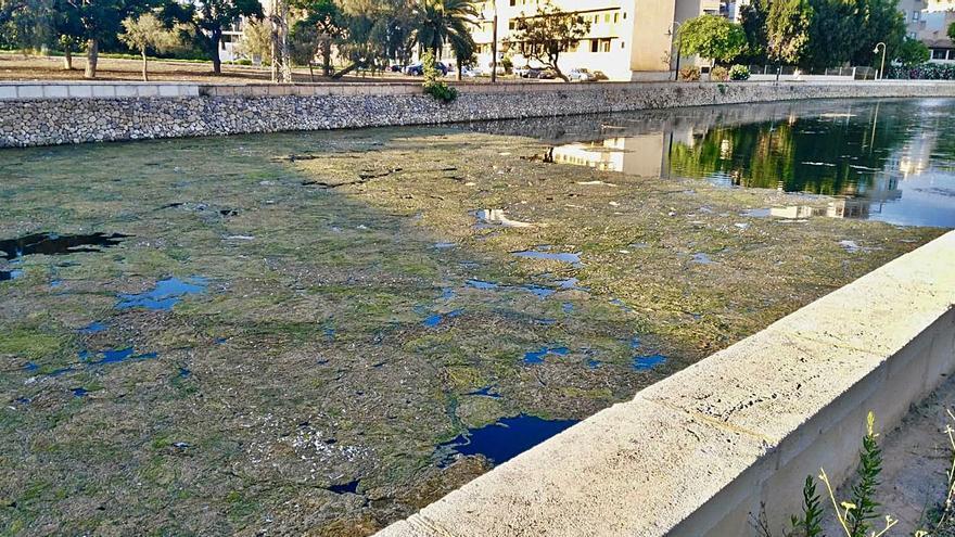 Estanque artificial de s'Illot: aguas verdes y un futuro incierto