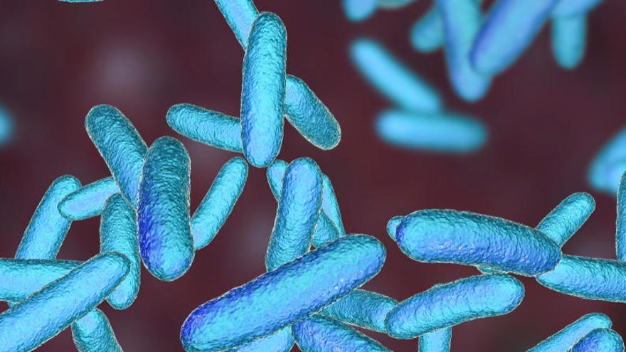 Una bacteria causó la muerte de cuatro bebés en un hospital de Italia desde 2018