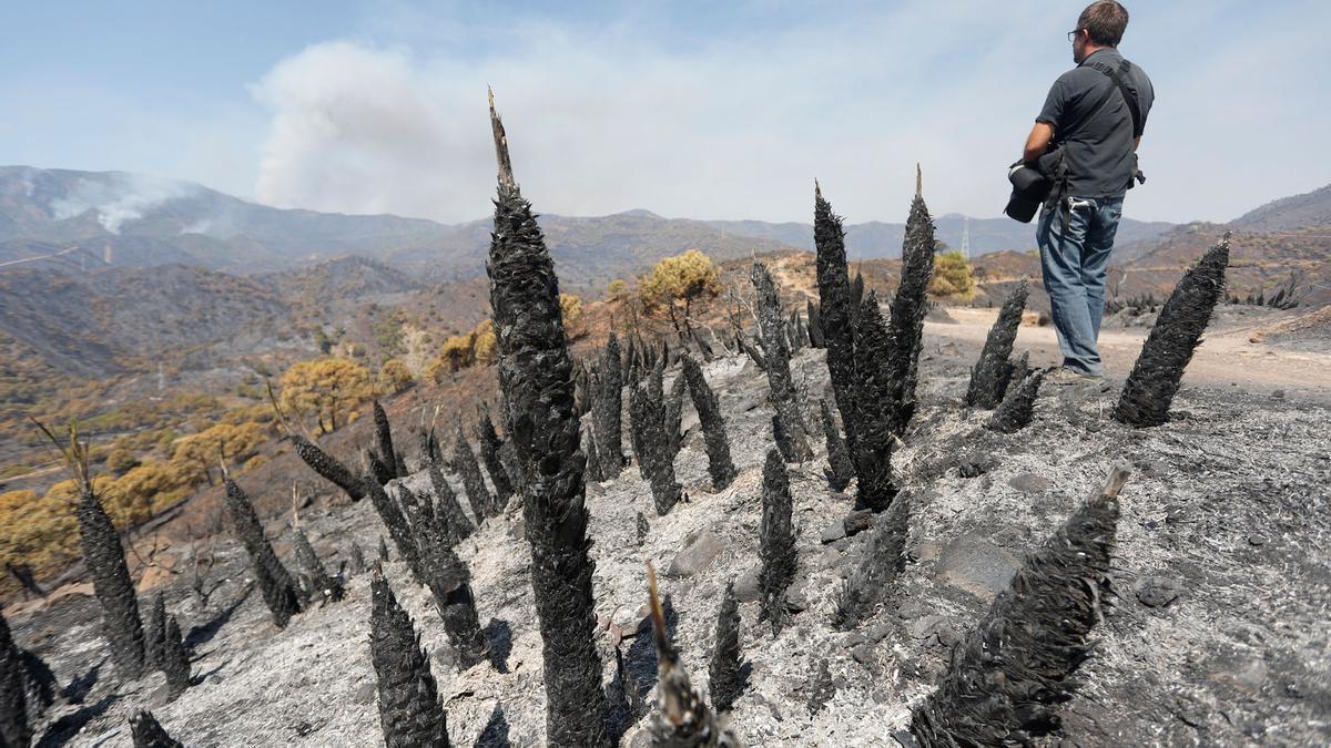 Tercera jornada de trabajos de extinción del incendio en Sierra Bermeja.