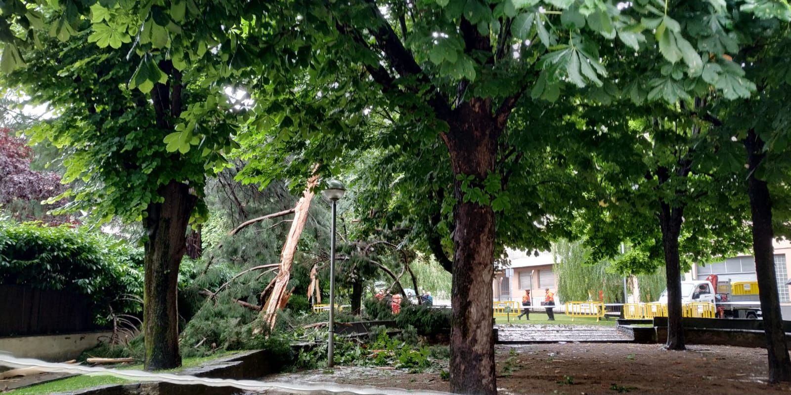 Un llamp trenca una sequoia centenària a Sant Joan de les Abadesses