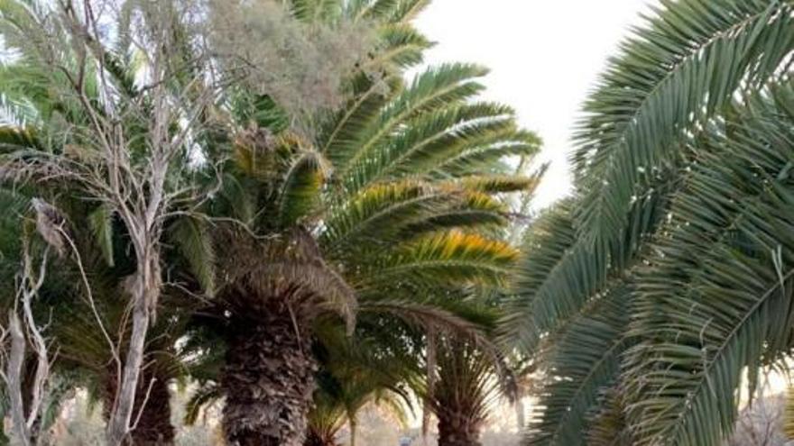 El parque Tony Gallardo de San Bartolomé de Tirajana reabre sus puertas