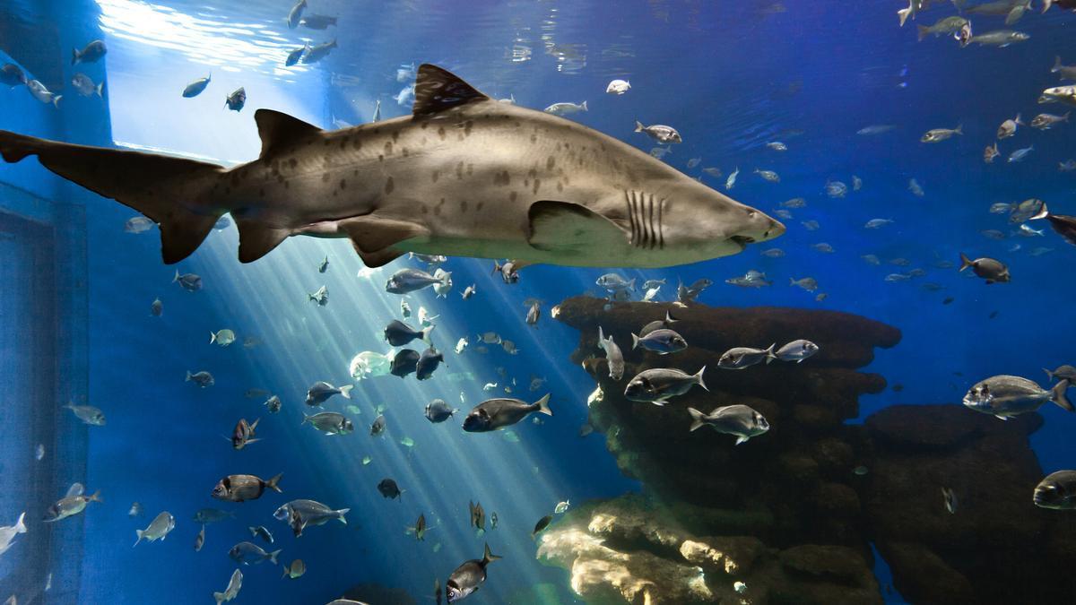 Palma Aquarium cierra en respuesta a la situación creada por la pandemia