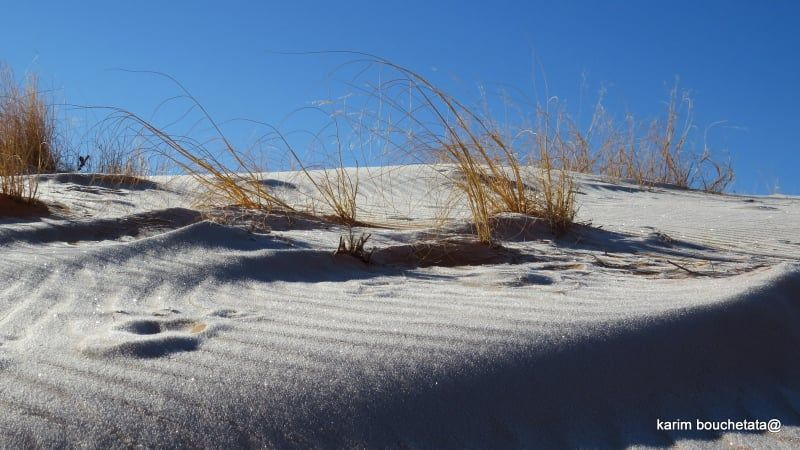 Nieva en el Sáhara