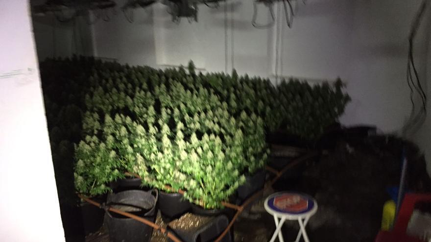 Entran en una casa de Molina pistola en mano para intentar robar plantas de 'maría'