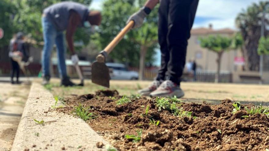 Generalitat i Ajuntament fan una prova pilot a Castelló d'Empúries per eliminar els herbicides en la jardineria urbana