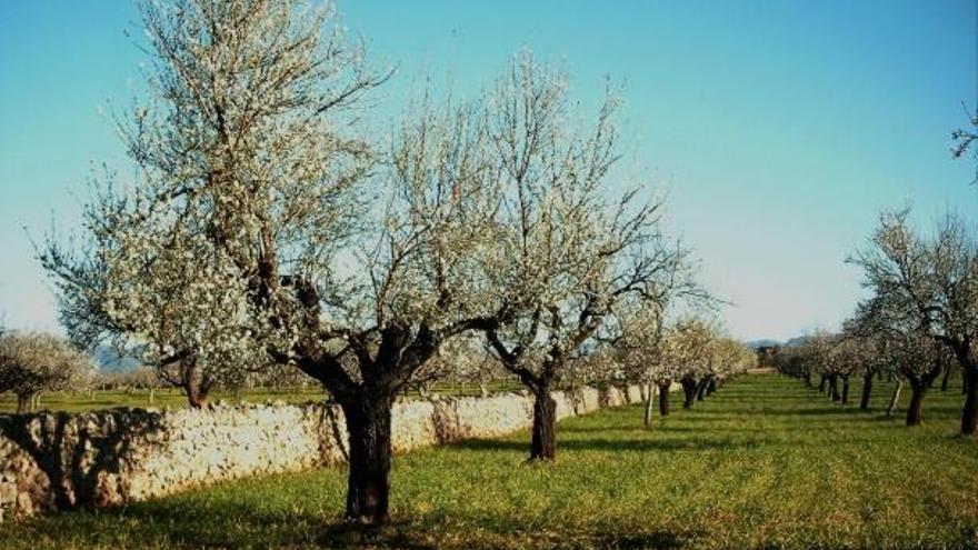 Wanderung auf Mallorca: Gipfel und Mandelblüte
