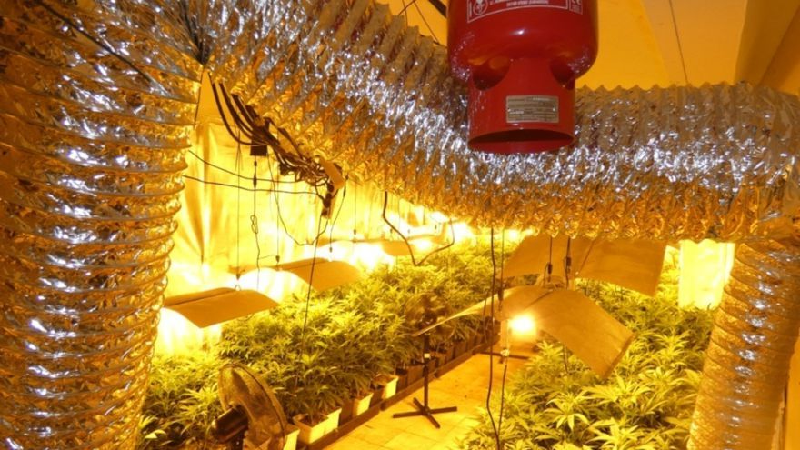 Troben gairebé 900 plantes de marihuana repartides entre una casa a Artés i una masia a Pinell