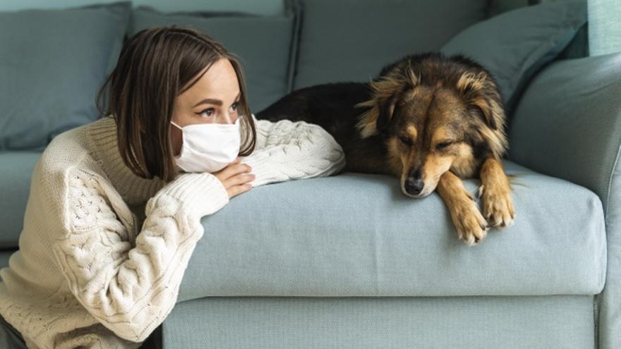 Los perros, más eficaces que una PCR