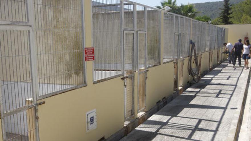 Retiran a una persona siete perros bulldog en Ibiza tras un incidente