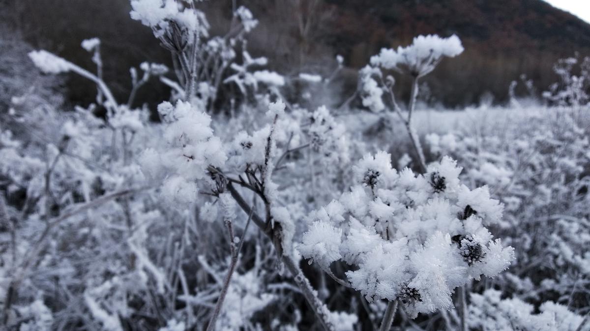 Campo helado por el frío.
