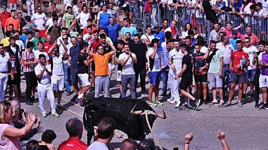 La plácida carrera del toro navarro sin nombre