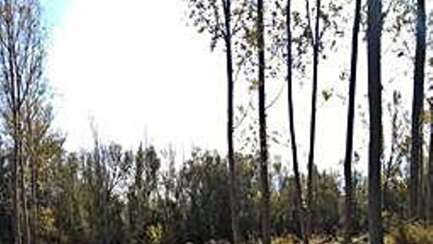 Pobladura tendrá que pagar 30.000 euros a una empresa por la venta de madera