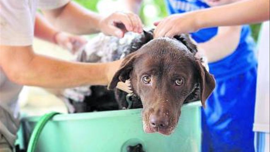 Trasplante de pelo para perro en Turquía