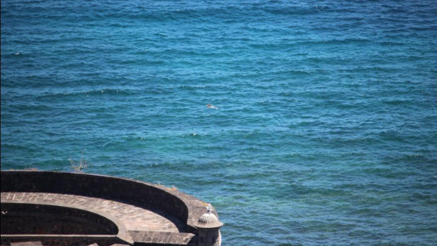 Hallan un delfín muerto frente al Auditorio de Tenerife