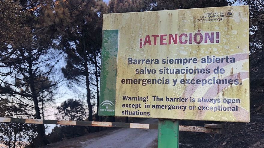 Sierra Bermeja, un bosque de plata vieja donde ya renace el verde