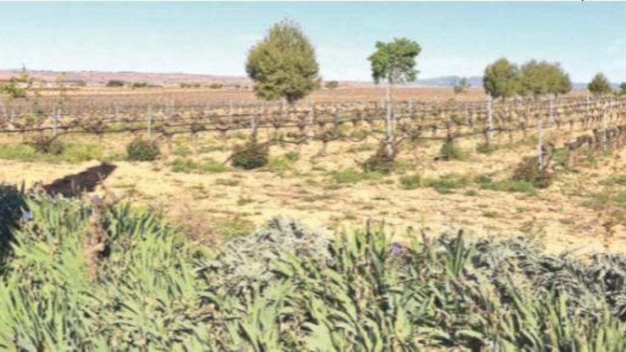 Biodiversitat per a millorar la rendibilitat de la vinya