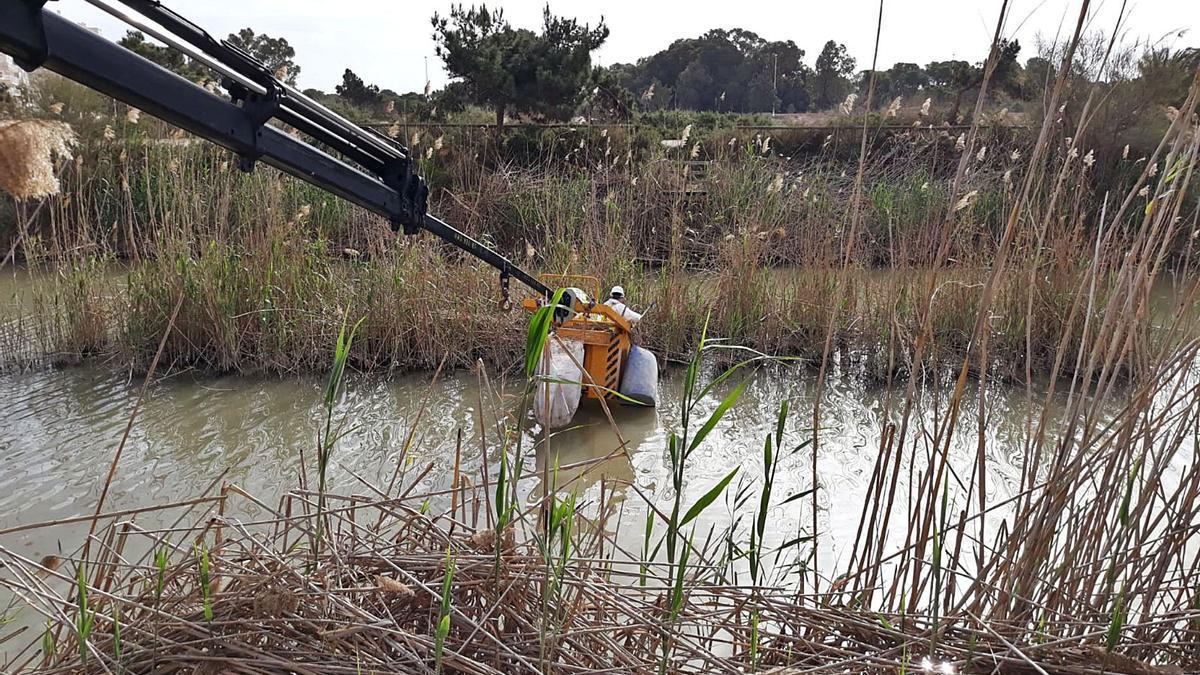 Operarios retirando esta semana los plásticos acumulados en el antiguo cauce del río Segura en Guardamar.  | INFORMACIÓN