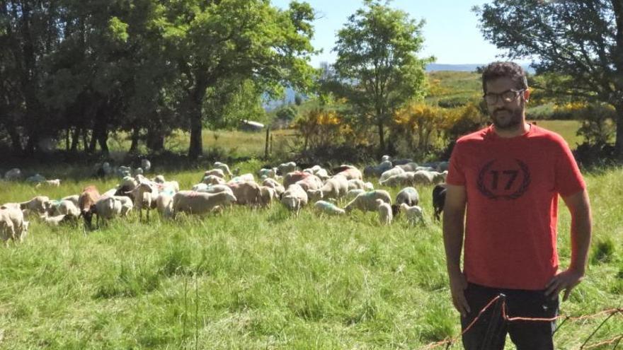 """Las ovejas que conviven con lobos: """"Eu aposto pola convivencia coa fauna salvaxe"""""""