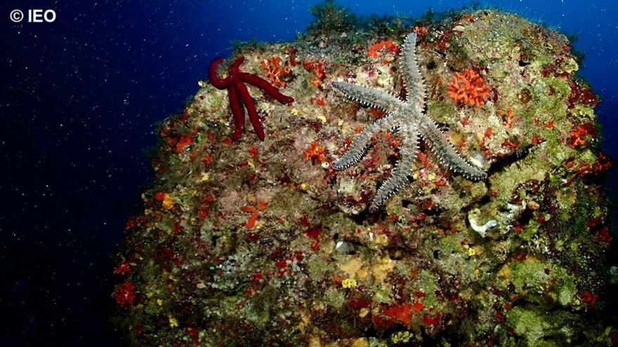 Inteligencia artificial para investigar el fondo marino de Cabrera