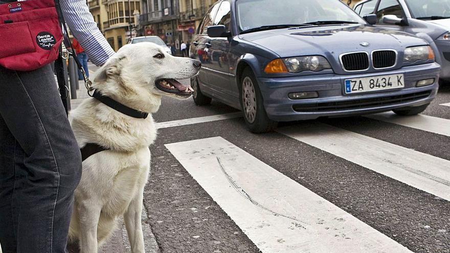 Día del Perro Guía: los ojos de los que no pueden ver, también en Zamora