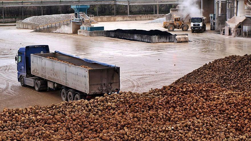 La azucarera abrirá sus puertas a finales de octubre o principios de noviembre