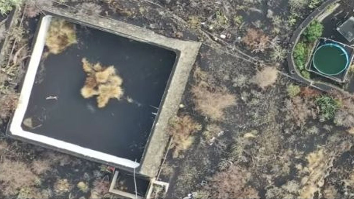A cat trapped in an ash-covered pond and surrounded by lava flow from the volcano.