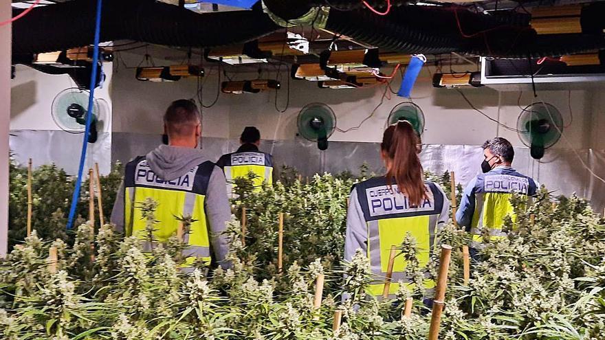 Un juez cuestiona la reclamación de Iberdrola por enganches a la luz para cultivar droga en Benidorm
