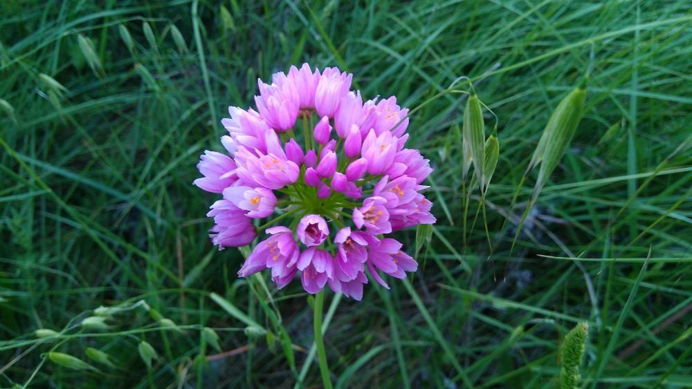 Orquídia. És una planta perenne i resistent. La majoria d'orquídies necessiten claredat i eviten en tot moment la filtració de raigs directes. Un misteri de forma i funció.