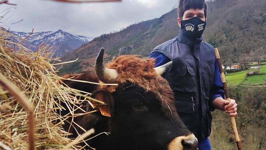 La jornada de Nacho Fernández, uno de los ganaderos más jóvenes de Asturias