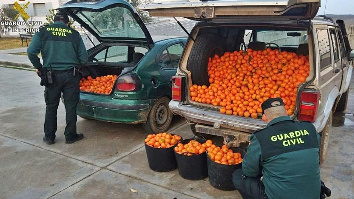 Agentes de la Guardia Civil, en una operación contra el robo en los campos. | LEVANTE-EMV