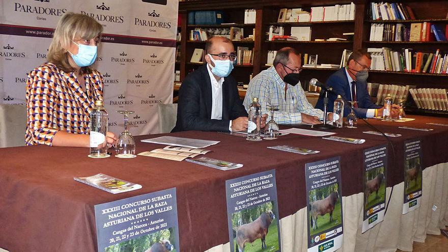 Cangas del Narcea elige a las mejores reses de la raza asturiana de los valles