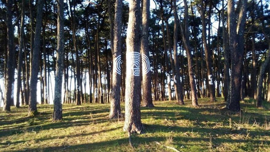 Camposancos pide que su bosque pintado sea declarado BIC