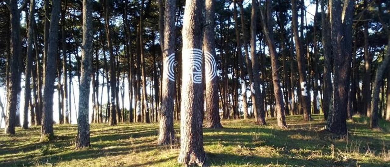 Los petroglifos de Santa Trega se plasman en los pinos de O Puntal, en Camposancos.