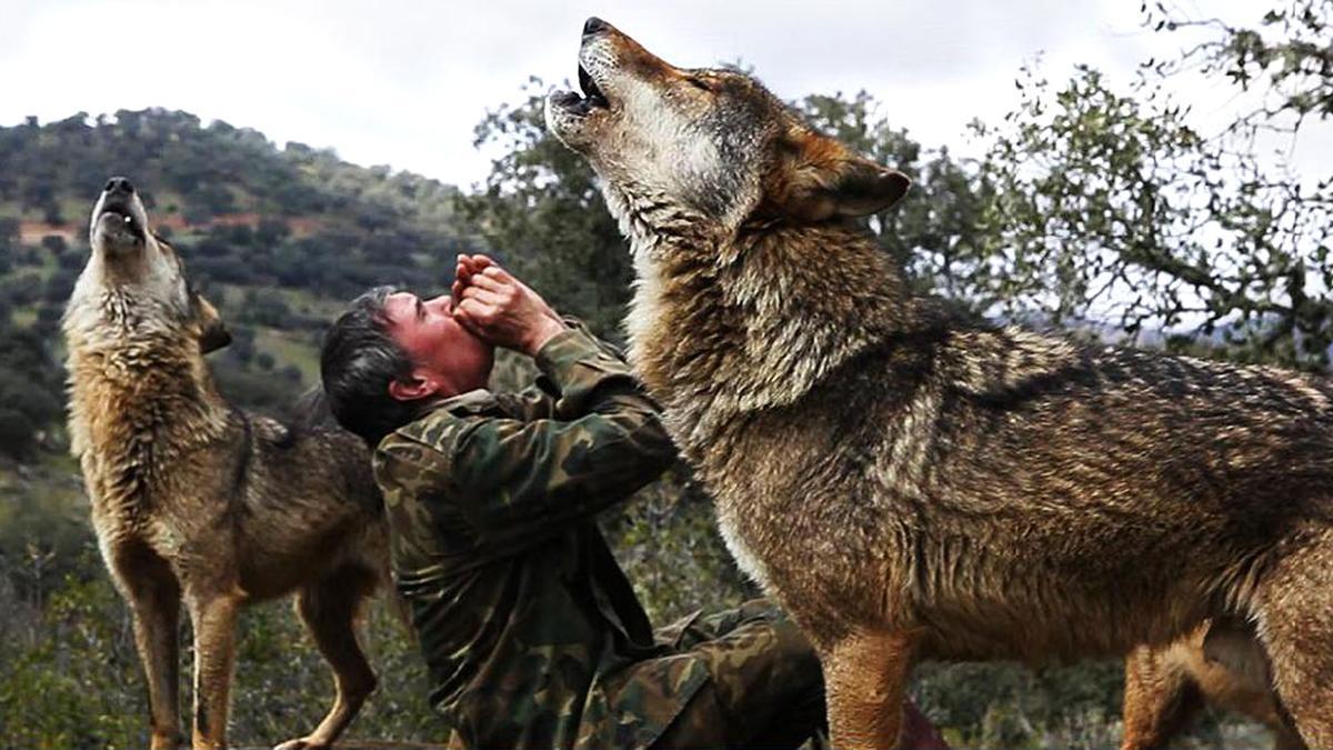 Imagen de un documental sobre lobos.