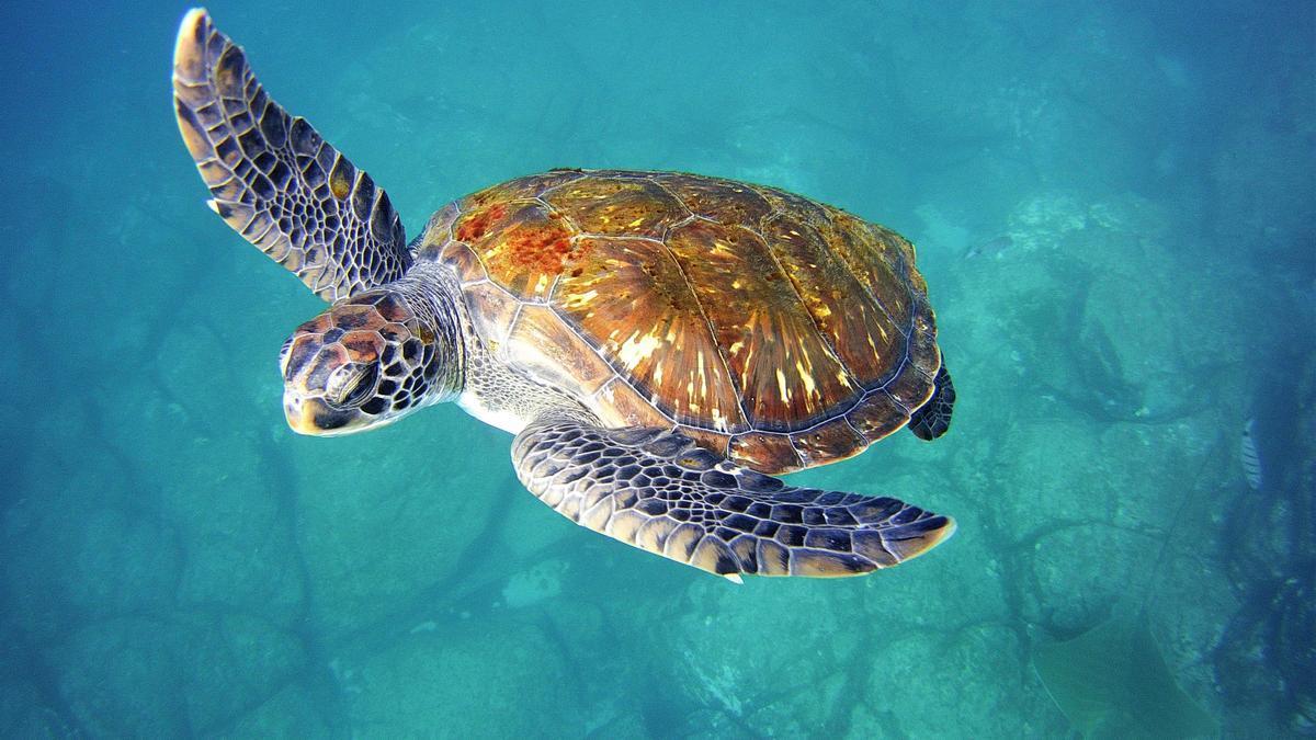 Un catálogo oceanográfico identifica 1.700 especies al este de Canarias
