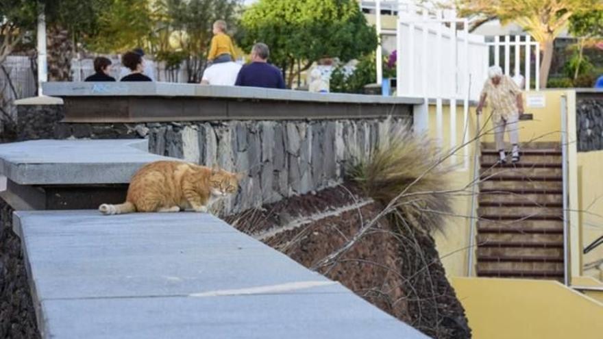 PACMA acusa al Gobierno canario de destinar 273.000 euros para matar gatos y hurones