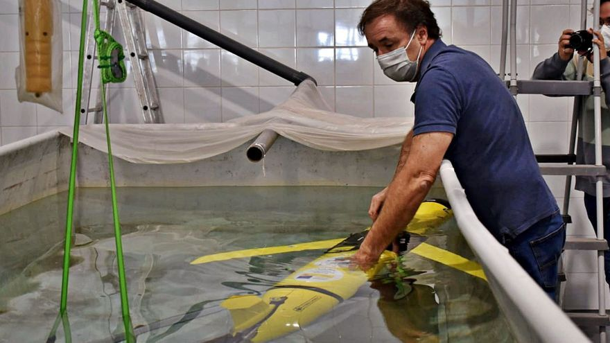La ULPGC estudia el ruido submarino y su efecto en cetáceos en aguas canarias