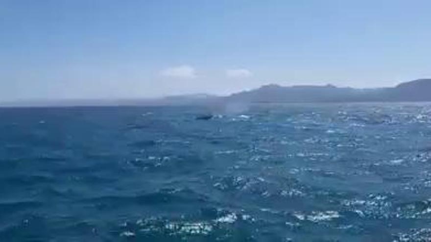 Un barco avista tres grandes ballenas a milla y media de la costa de Cullera