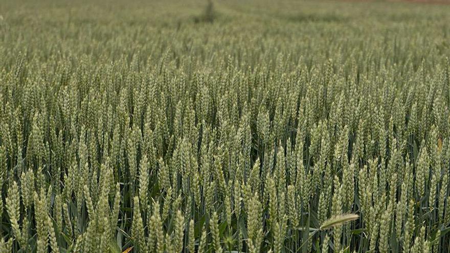 Los agricultores piden a San Isidro más agua para sus cultivos